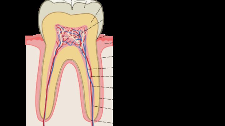 Британские учёные нашли новый способ лечения кариеса зубов